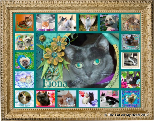Remembering Friends on Rainbow Bridge Remembrance Day.