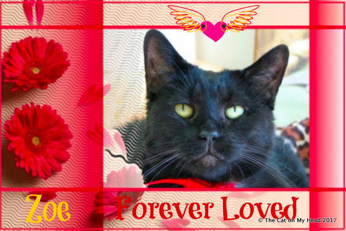 Remembering Zoe from Animal Shelter Volunteer Life.