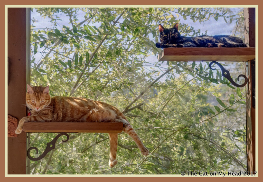 A sunny day is for lounging on the catio perches.