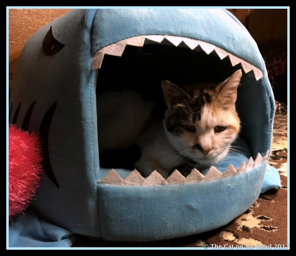 Lily Olivia lounging in shark bed.