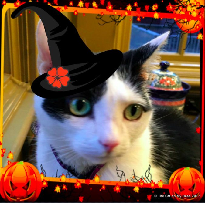 Lisbeth celebrates National Cat Day and Halloween.