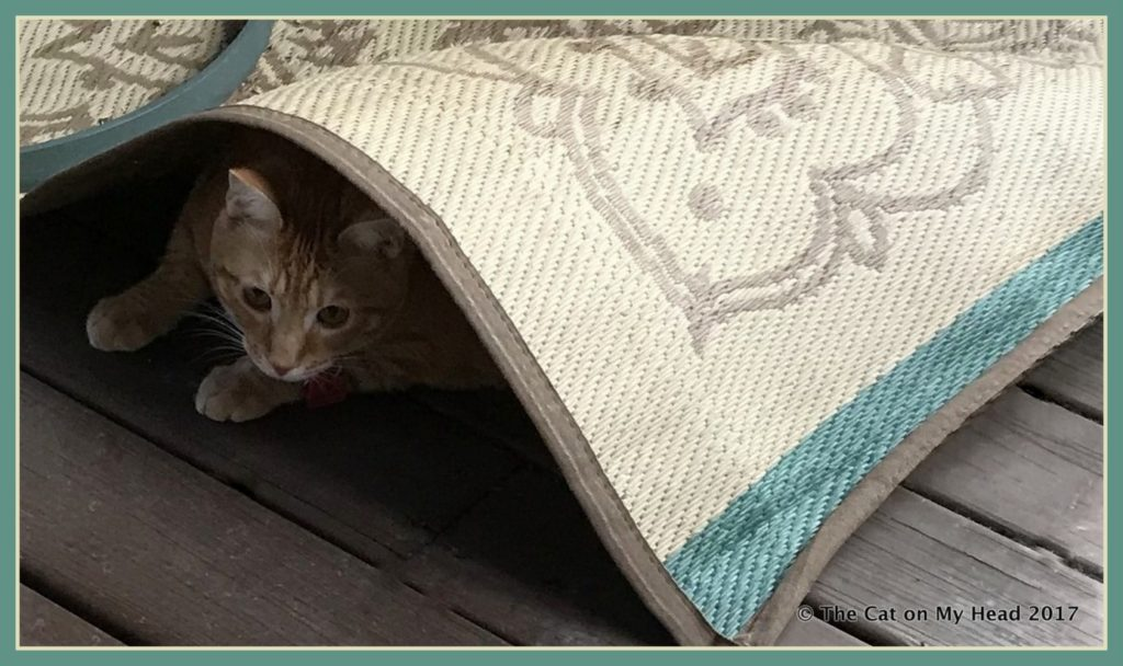 One of Cooper Murphy's favorite things to do is burrow under rugs, both inside and on the catio.
