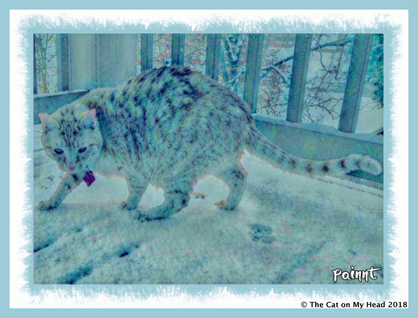 frosty Cooper for Caturday Art
