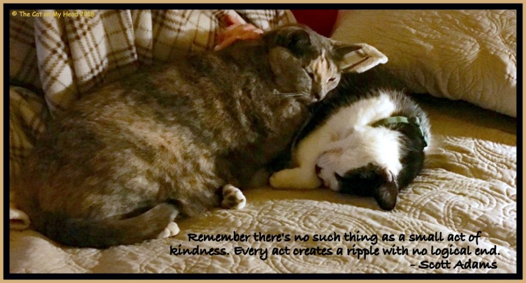 Sparks of Kindness with Mau and C.J.