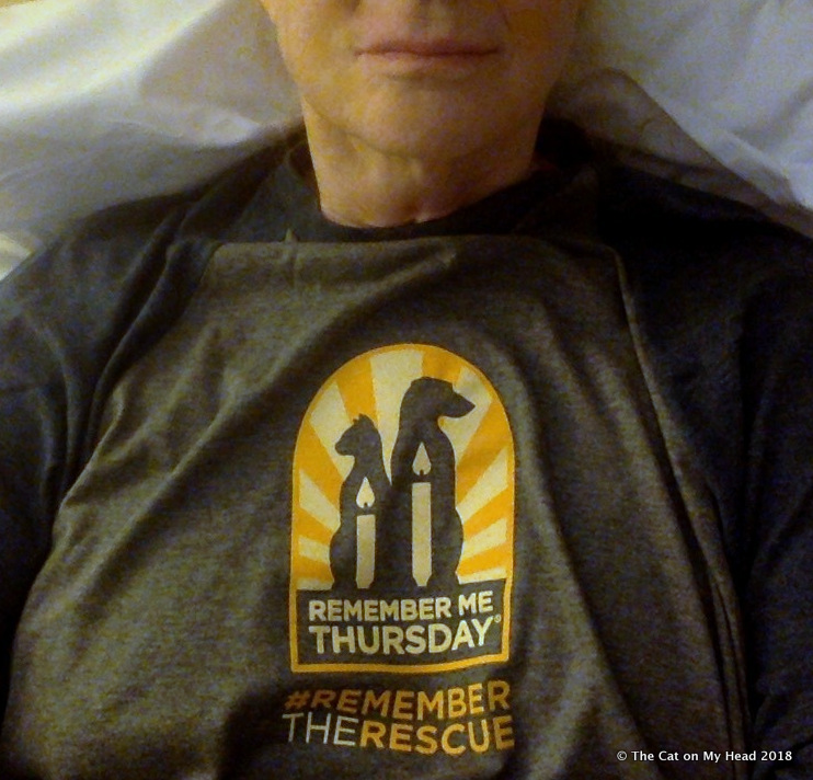 Remember Me Thursday BlogPaws 2018