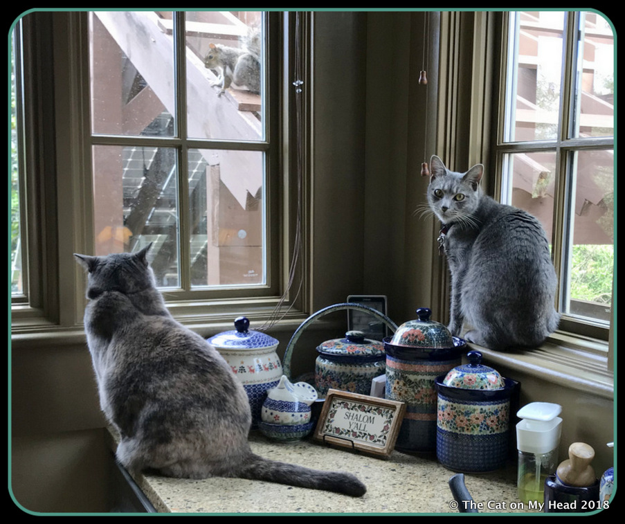 C.J. and Sawyer are on Squirrel Alert.