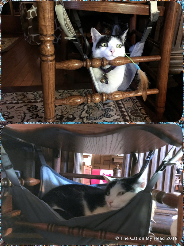 Lisbeth was the first to claim the Happy Hammock.