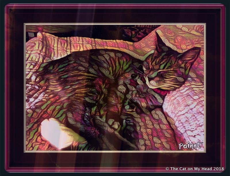 Caturday Art - piZap Blaze