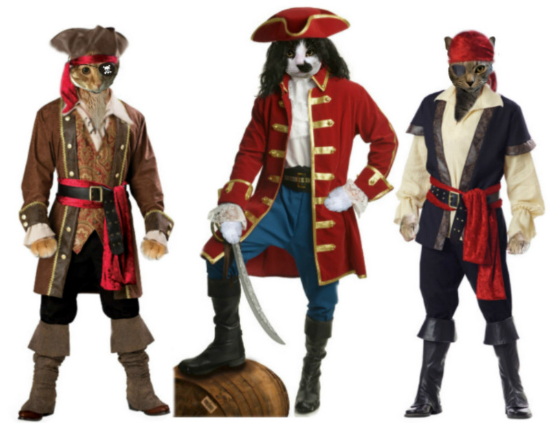 Pirate cats: Cooper Murphy, Mau, Sawyer