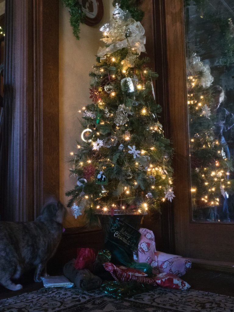 Feline Friday - Twinkle's Tree
