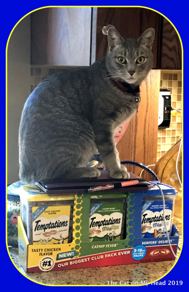 Sawyer offers to help open Temptations cat treats.