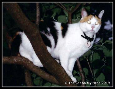 cats - Chloe