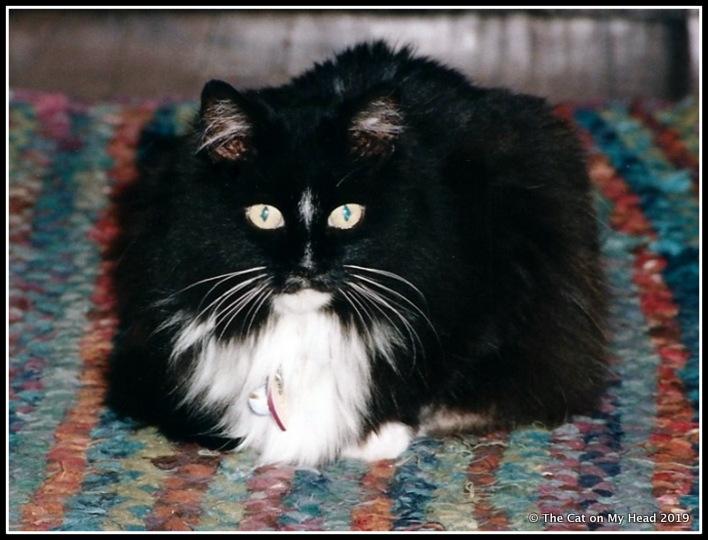 cats - Daphne