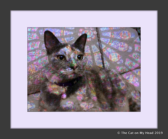 Caturday Art: C.J. & Rose window