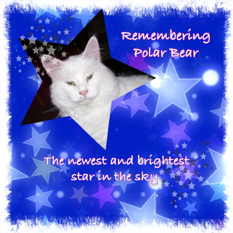 Rainbow Bridge - Polar Bear
