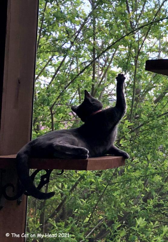 squirrel & cat antics