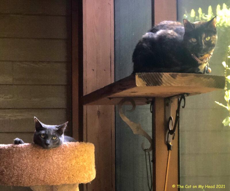 catio companions on Wordless Wednesday