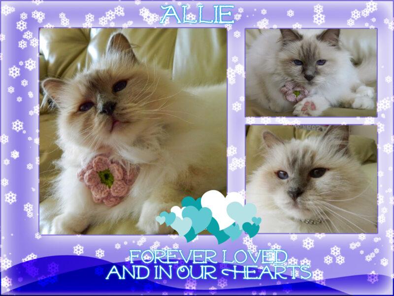 remembering Allie