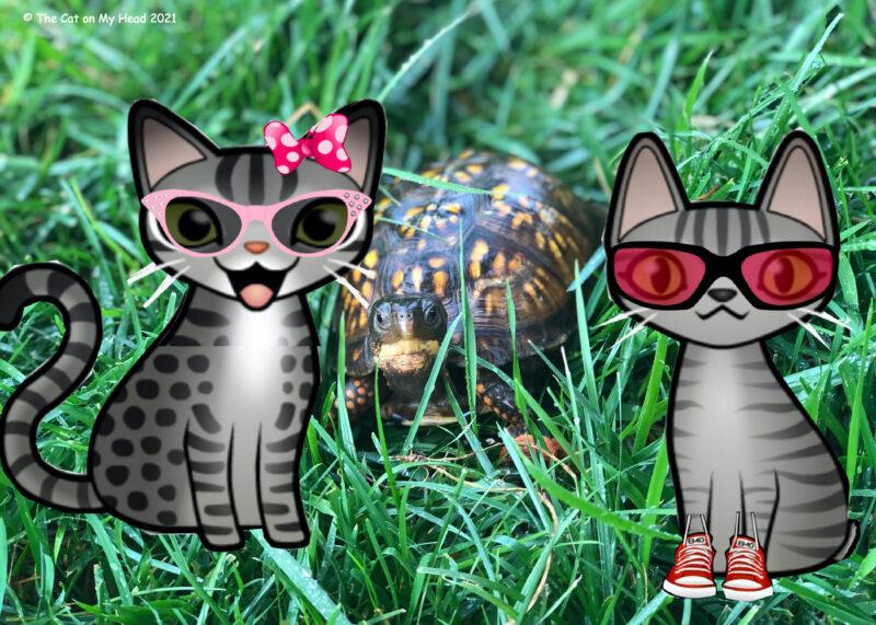 Woodland Box Turtle