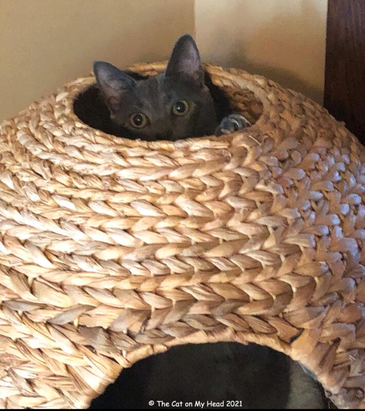 CAT KIZMET PEEKING FROM SPERE
