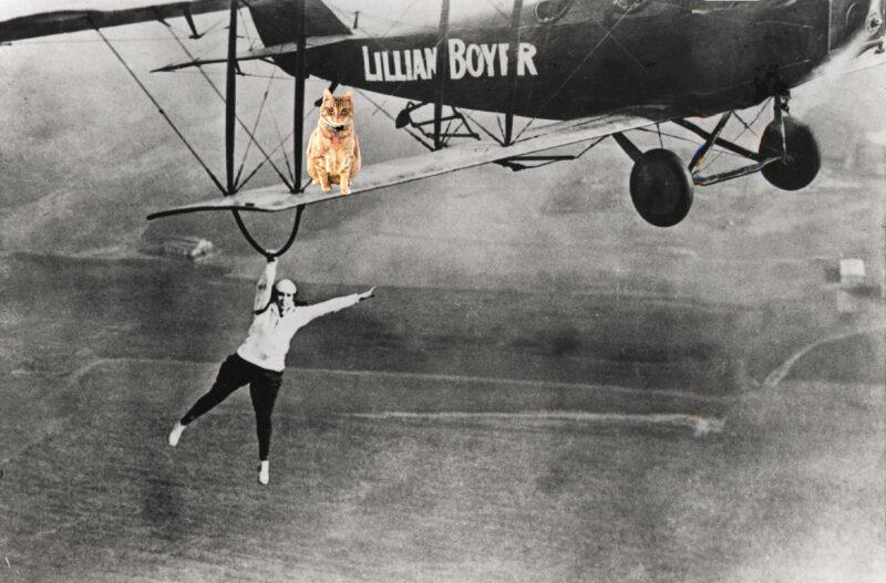 flying ginger tabby