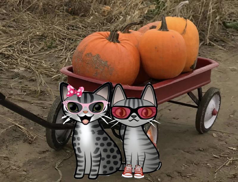 tabbies pumpkin farm